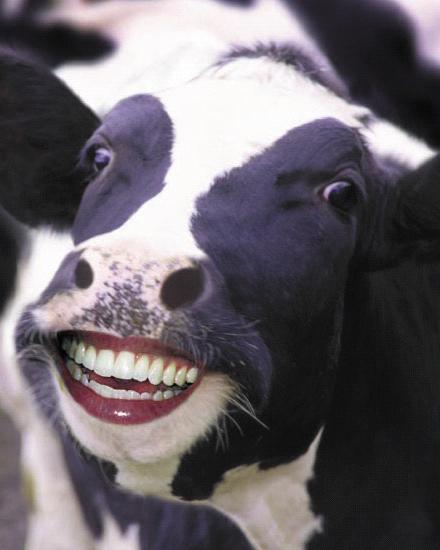 cartoon-happy-cow
