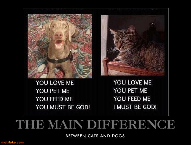 difference-cats-dogs-pets-animals-calendar-demotivational-posters-1433152561