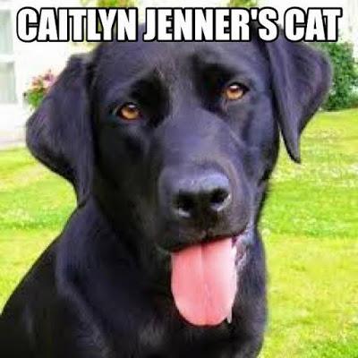 Jenner's cat