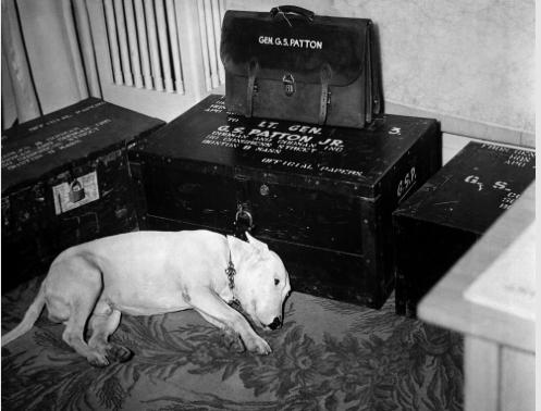 Patton's dog Willie