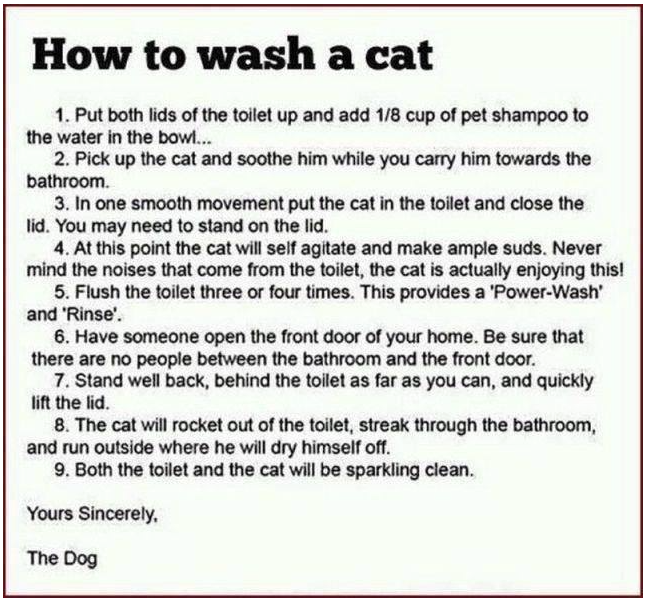 Wash the cat
