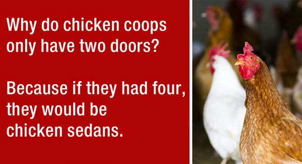 Car Facts: Chicken coops