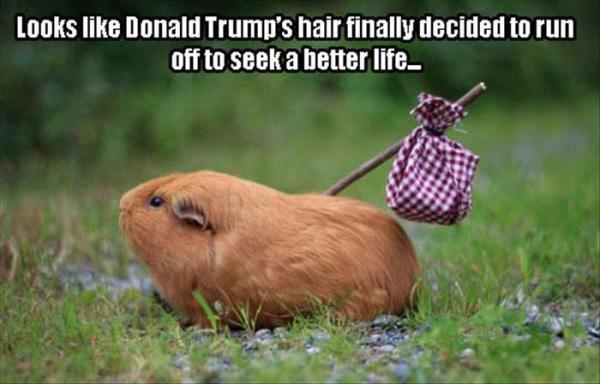 Trump's Hair runs away