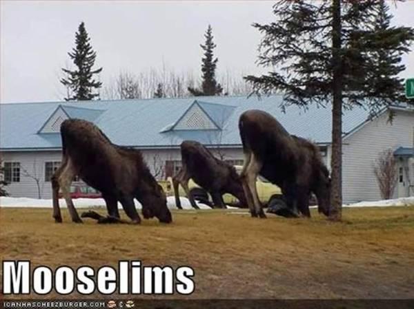 Mooselims