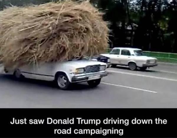 Trump-campaigning