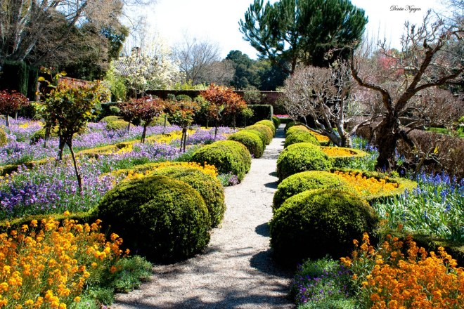 filoli_garden_2