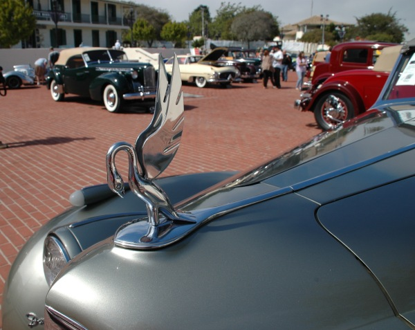 Packard-Darrin_cormorant