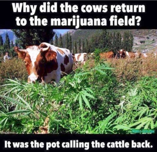 Groaner-pot_calling_cattle_back