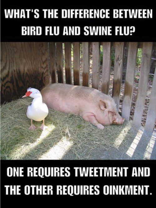 Groaner_Bird_Flu