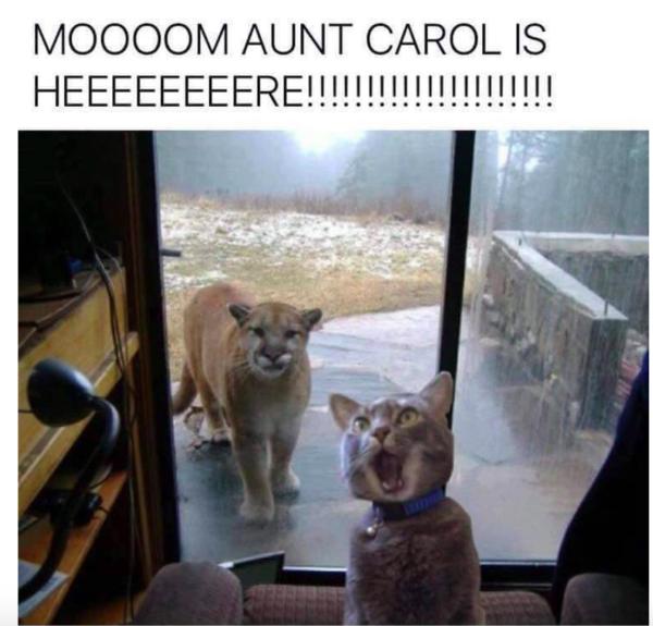 aunt_carol