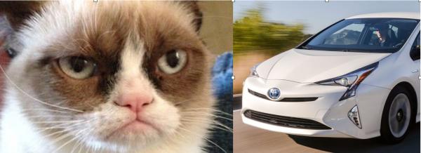 separated-at-birth-grumpy-cat-prius