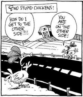 2-stupid-chickens