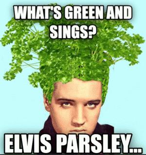 elvis-parsley