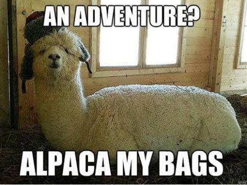 pun-alpaca