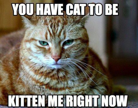 pun-kitten-me