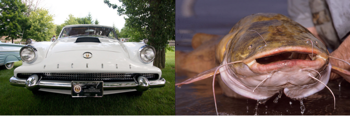 Separated at Birth-Packard Hawk_catfish