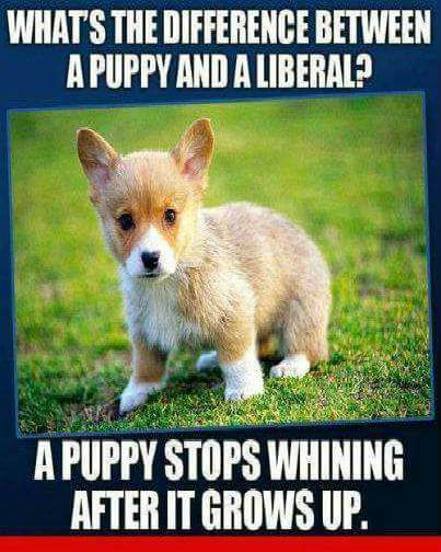 Libruls-and-puppies