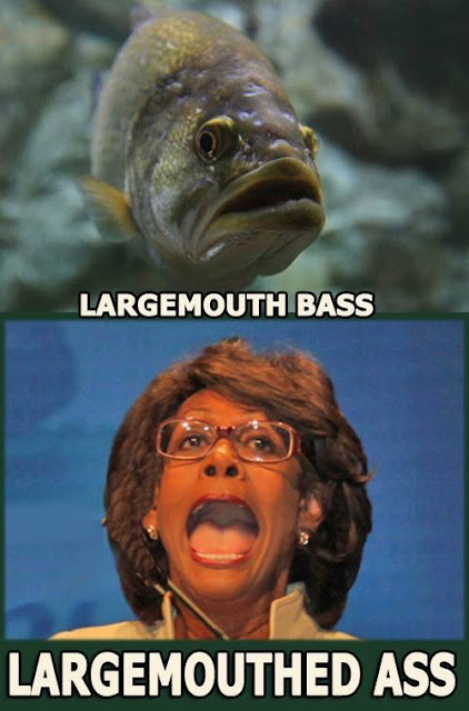 Maxine-Waters-separated at birth