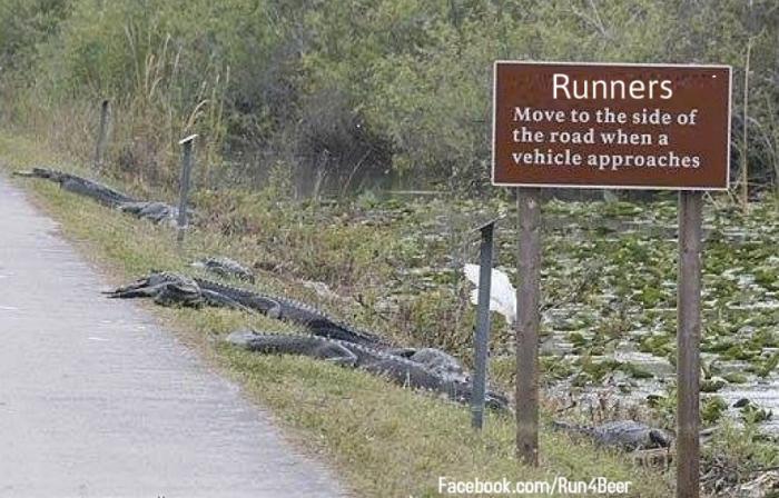 Runners-alligators