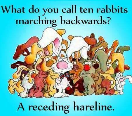 Receeding Hareline