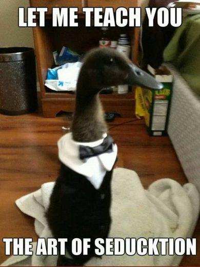 Duck Seducktion