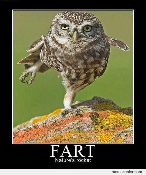 Farting-Owl