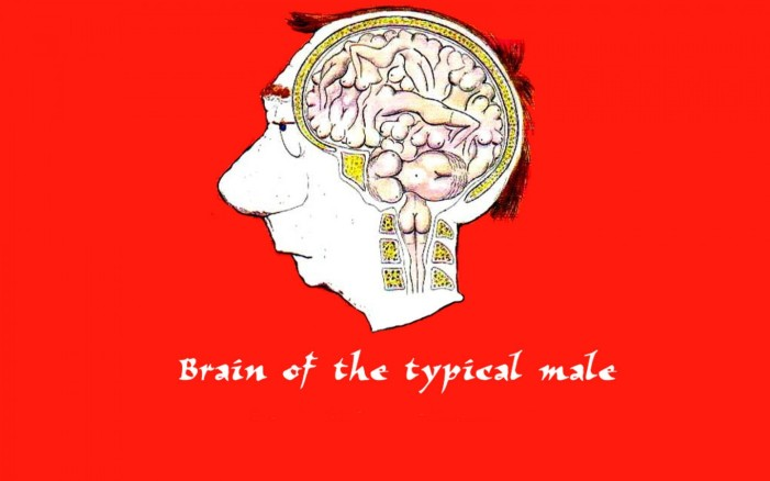 brain_of_the_typical_male