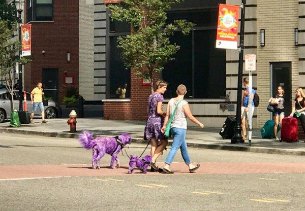 Crazifornia-purple_dogs