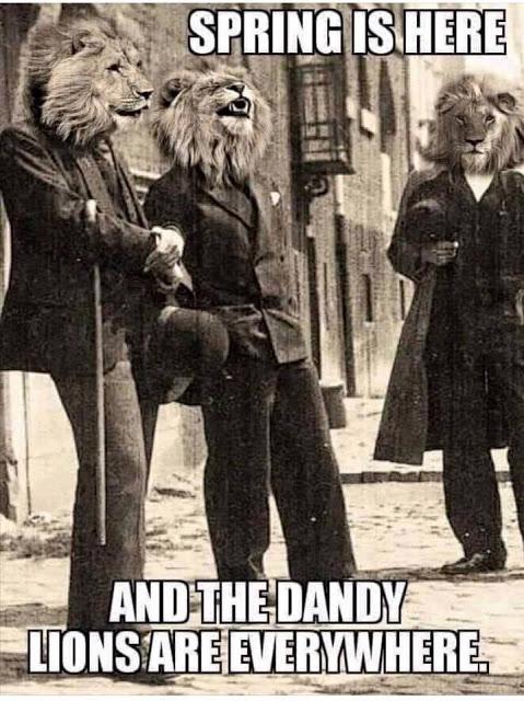 Dandy_lions
