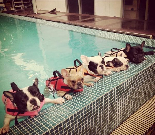 dog-swimming-lesson