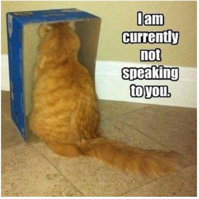 Katzndawgz-not speaking