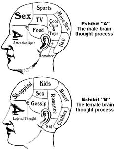 Male_vs_female_brains