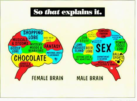 Male_vs_female_brian
