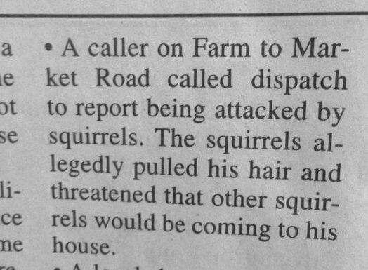 squirrels_criggo