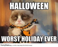 Costumes and candy are overrated. meme halloween Grumpy Cat cat funny pics