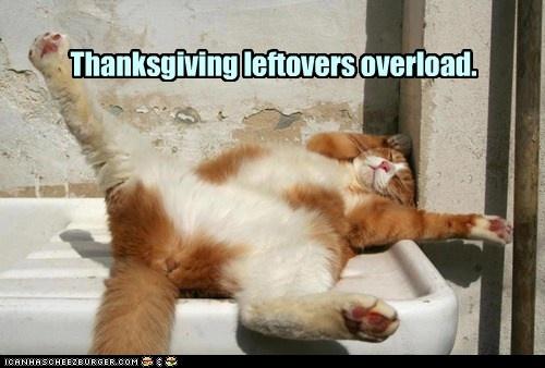 Katzndawgz-Thanksgiving Leftovers