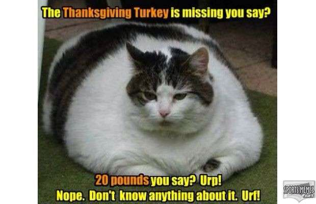 Katzndawgz-thanksgiving