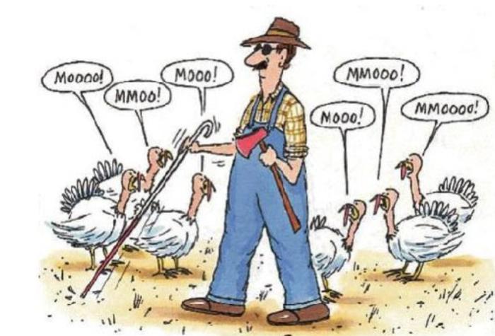 Turkey-blind farmer