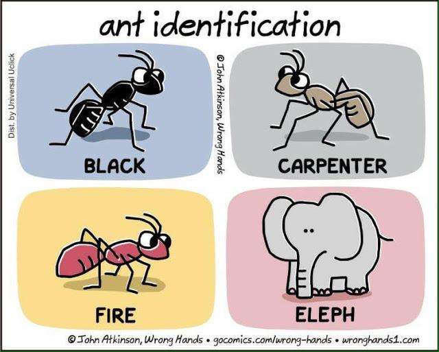 Ant_Identification