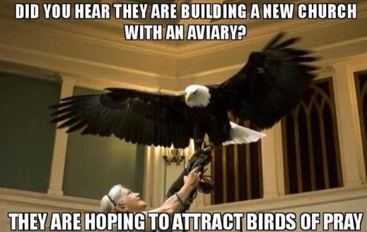 birdsofpray