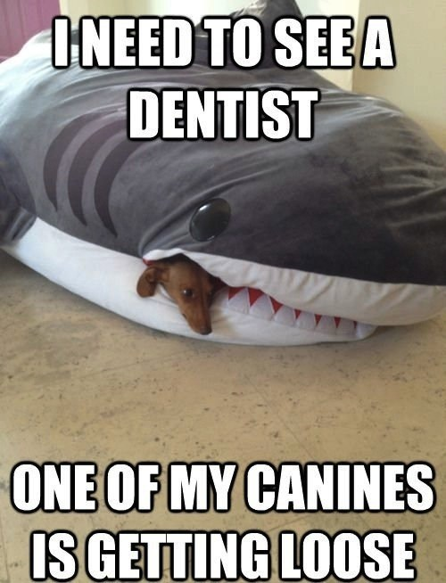 Loose Canines