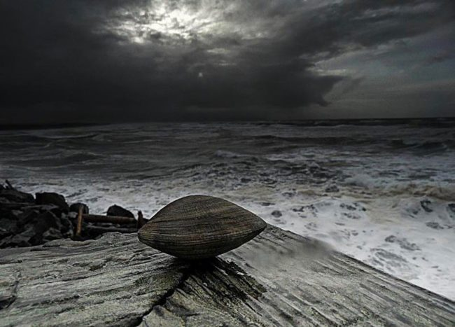 The-Clam-Before-The-Storm