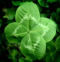 4 leaf clover-2