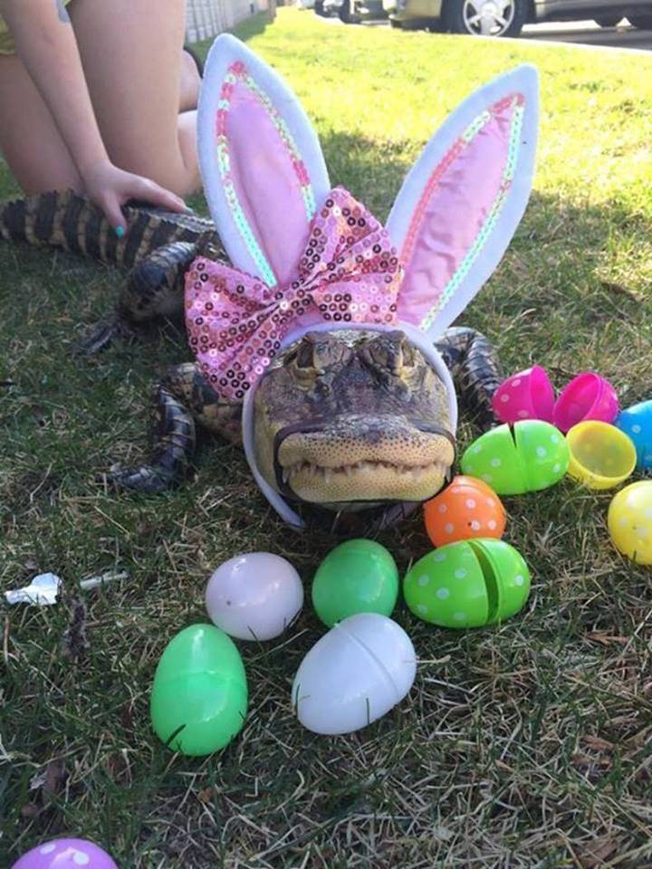 Easter in Floriduh
