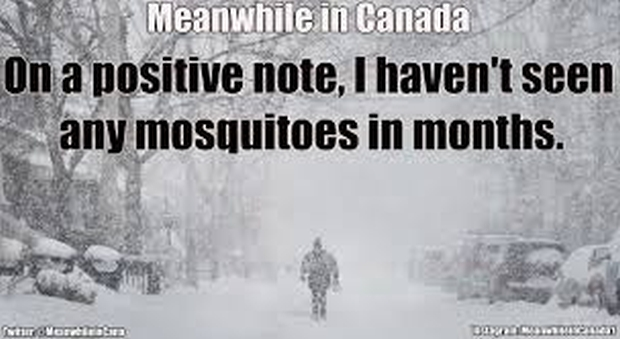 canada-snow-mosquitoes