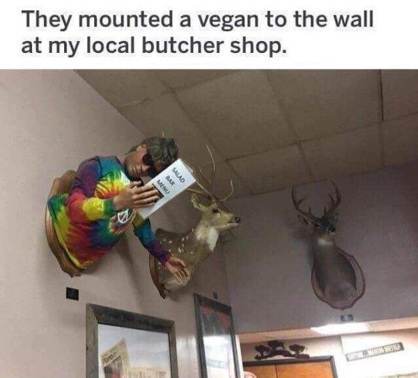 Vegan taxidermy