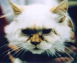 Cat-Eye-Discharge