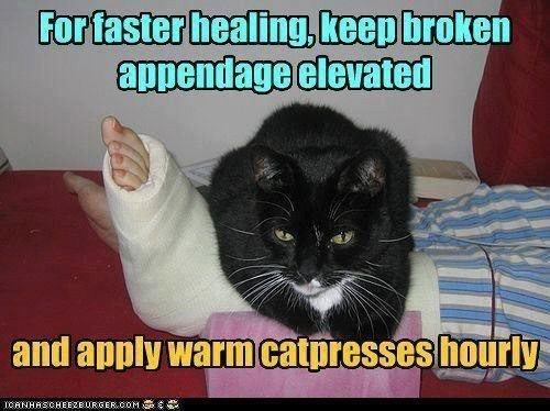 Catpresses
