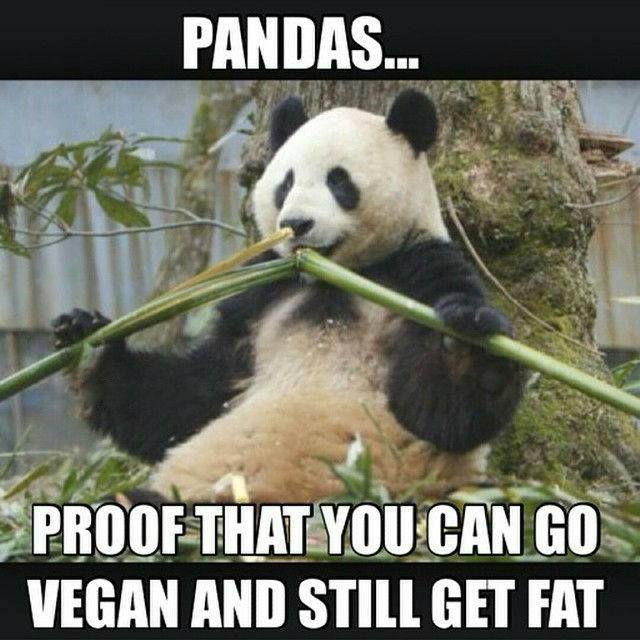 Vegan Pandas
