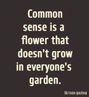 Snark-common_sense